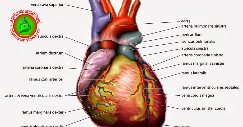 What is the first line treatment for hypertension