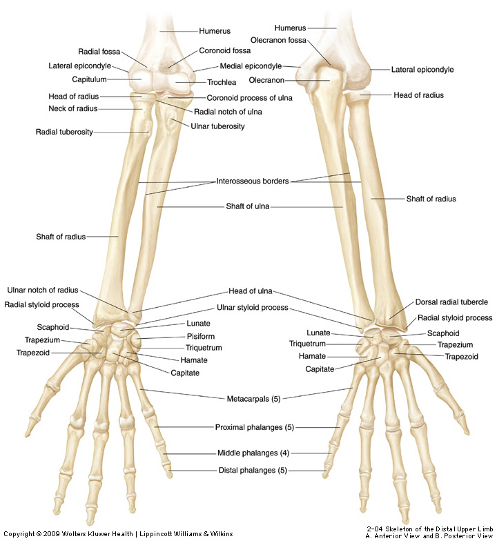 Ulnar Lower End Fracture