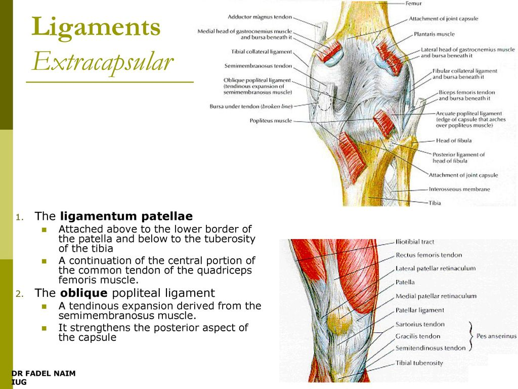 What Is Knee Dislocation?