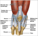 Treatment of Knee Osteoarthritis – Diagnosis, Treatment